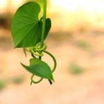ワイルドヤム、ハーブのチカラでPMSが自然に治る